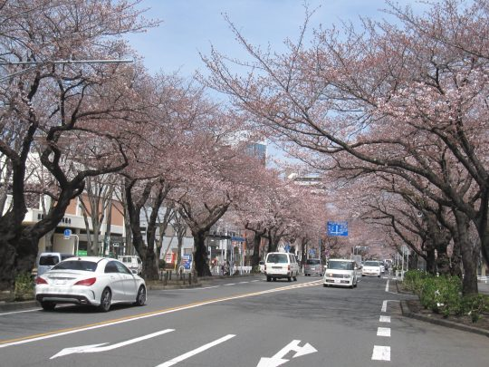 第44回 相模原市民桜まつりの会議