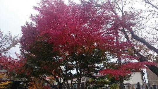 橋本の紅葉