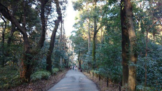 東京の森へ