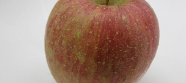 りんごをいただきました!