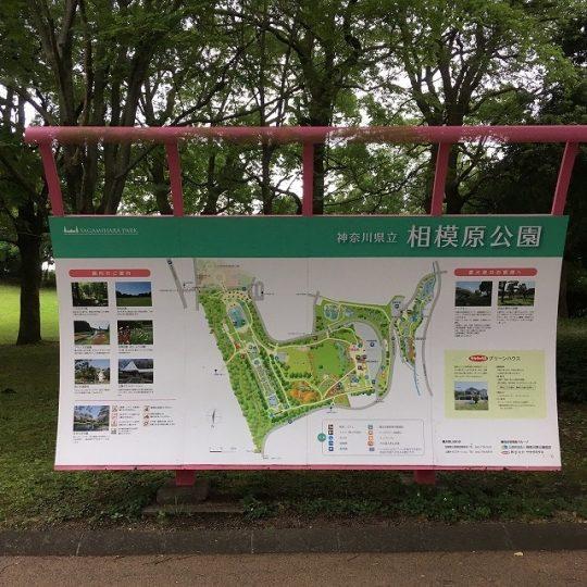 神奈川県立 相模原公園